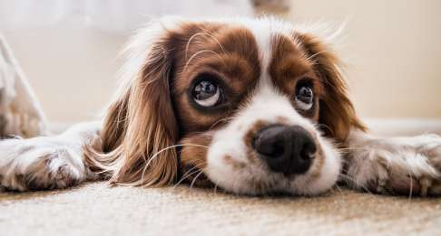 La dermatosi: la cute del nostro animale ci parla!