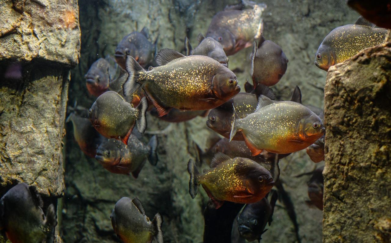 Attenzione a cosa metti nell'acquario!